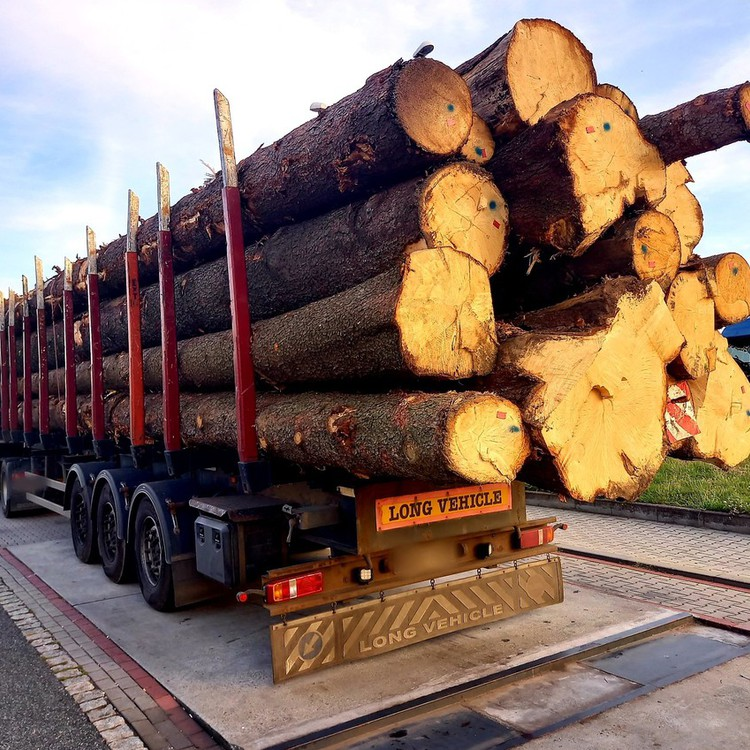 Galeria Rydwany i drewno na zakazach